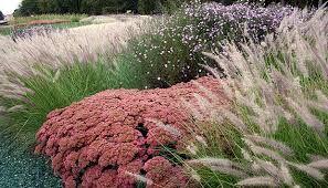 Bildergebnis für gräser und funkien