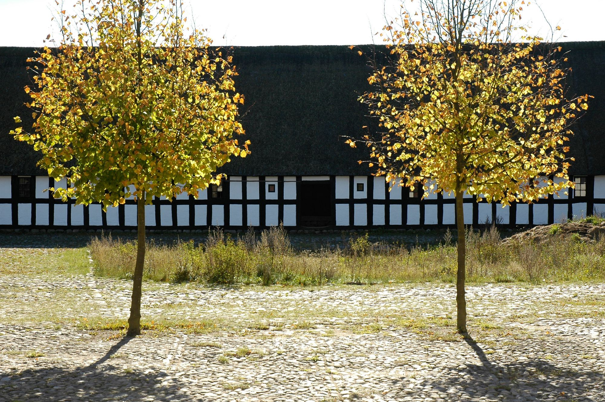 Autumn trees by the barn of Fjellerup manor at The Open Air Museum.