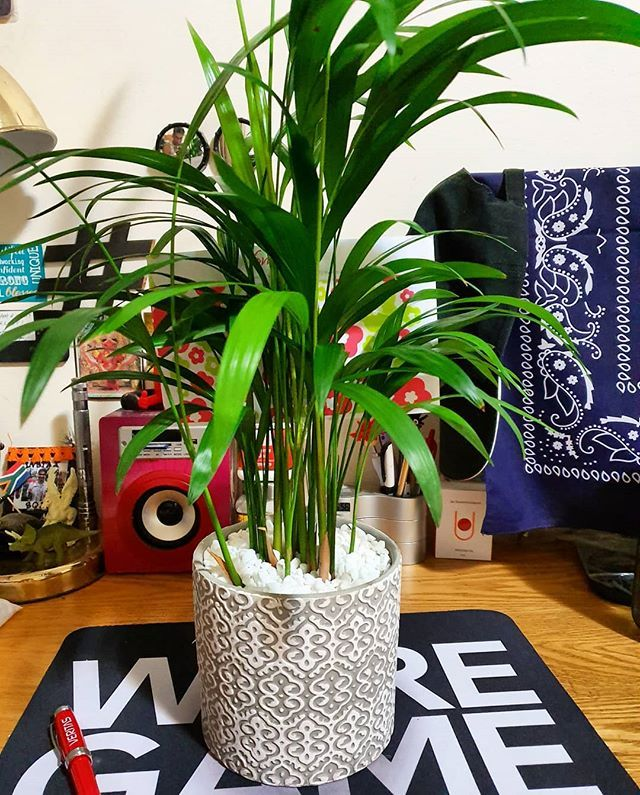 Thanks to @netflorist #SouthAfrica for making my desk look greener in celebration of upcoming #johannesburginternationalflowershow @_themallofafrica from 30th Oct to 3rd Nov 2019. If you are #Flowers fan then do checkout the show whose motto is #BringsJoytoJozi #GrandPavilionofFlowers Buy your tickets now! #Thelifesway #Photoyatra #Johannesburg #walkingwithcamera #photographerwithpassion #Grateful #WithGalaxy #galaxynote10plus #powerof10 #mobilephotography #aashishraijain #Instagrammer #Blogger
