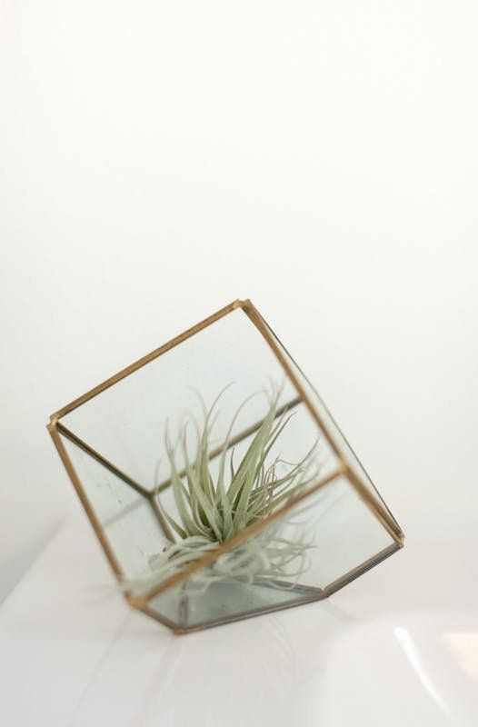 Air Plant Care Tips - How To Grow Air Plants | Apartment Therapy