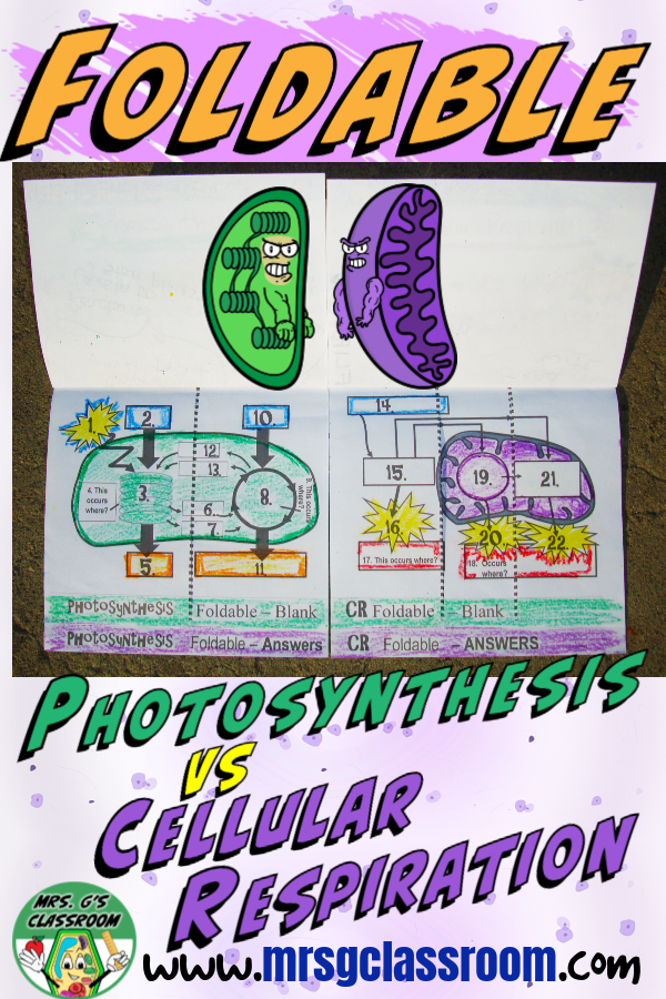 Photosynthesis Cellular Respiration Mrs. G's SCIENCE