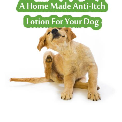 A Home Made Anti Itch Lotion For Your Dog Living Green