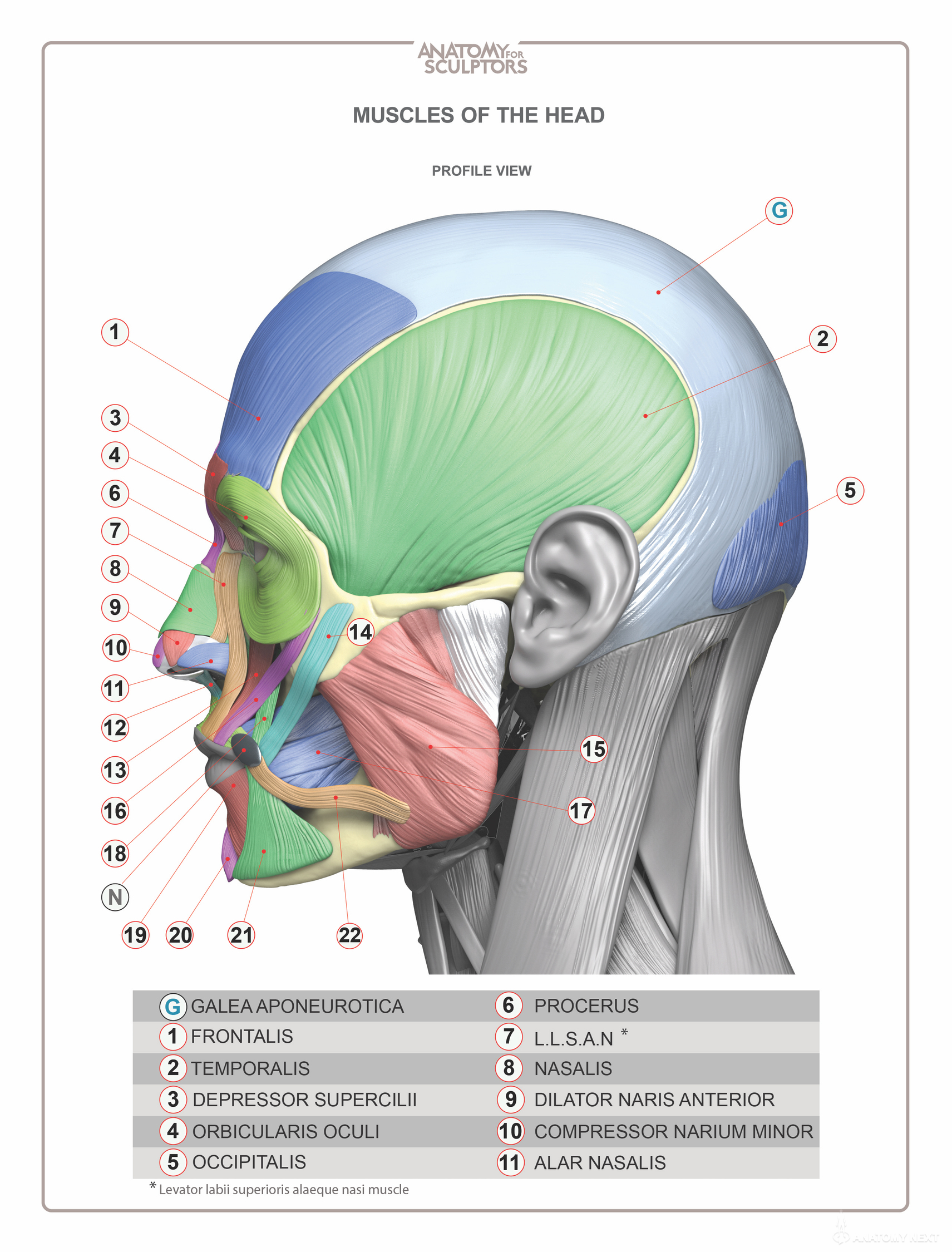 Head Amp Neck Anatomy Book