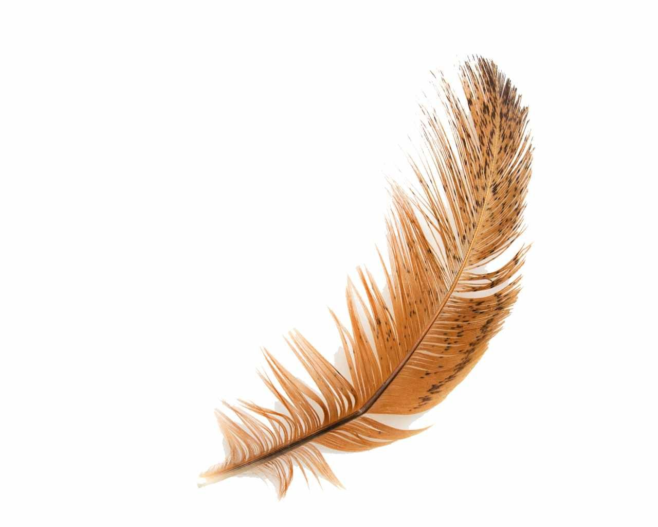 Feather Google Search With Images Feather Wallpaper Feather