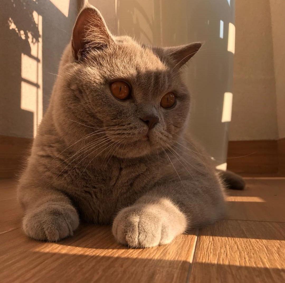 Tumblr Edition Kitten Animals Cats