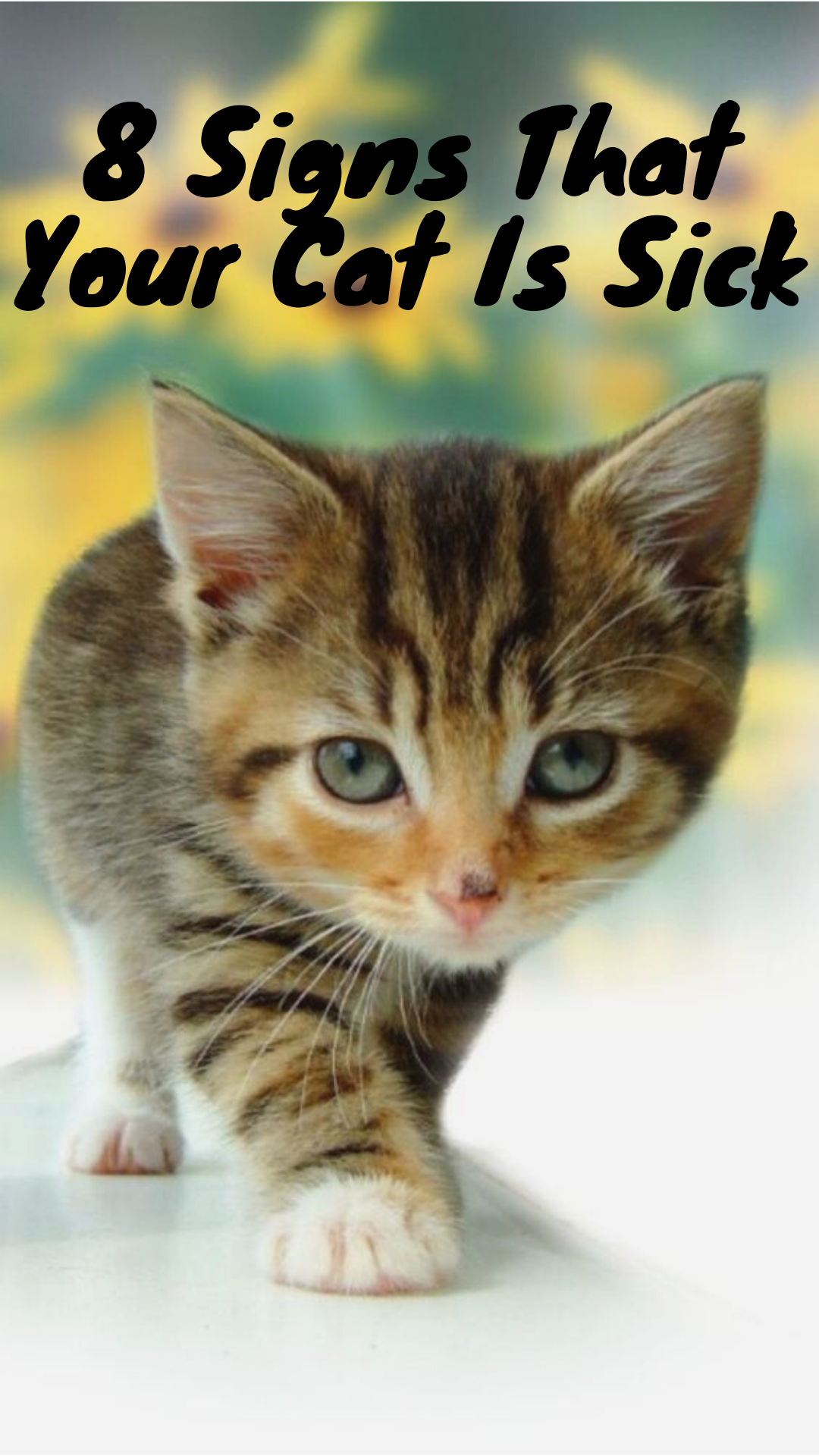 8 Signs That Your Cat Is Sick Sick Cat Cats Kittens Funny