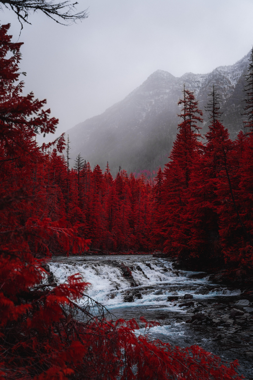 iPhone wallpaper inspiration / Autumn Aesthetic / Winter