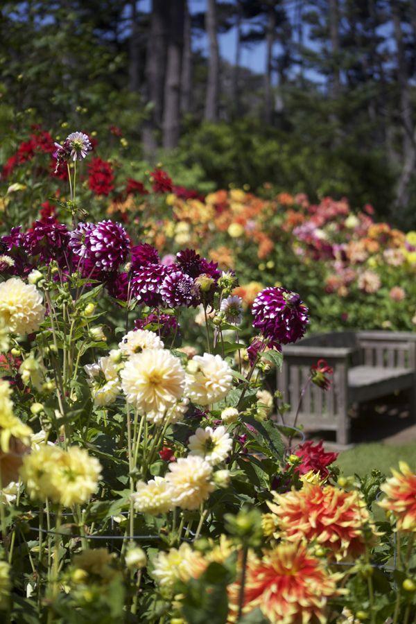 3418deea5927b7deedfad3e15f4a28f0 - Festival Of Lights Mendocino Coast Botanical Gardens