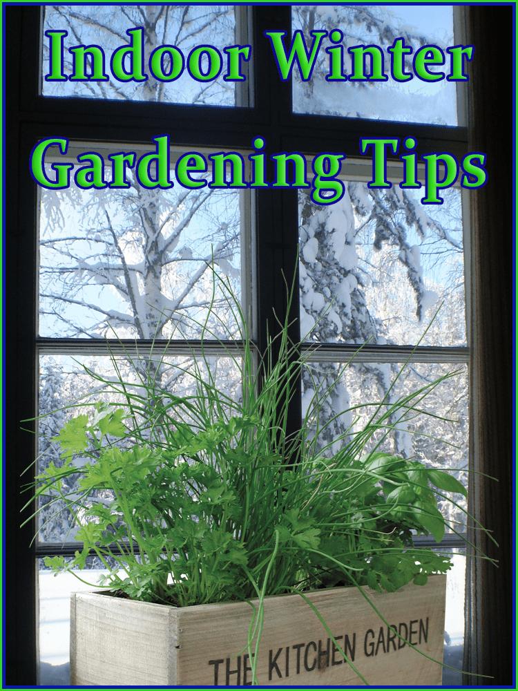 Indoor Winter Gardening Tips Winter Garden Indoor Plants