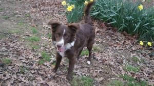 Adopt Skye On White Border Collie Border Collie Dog Dogs