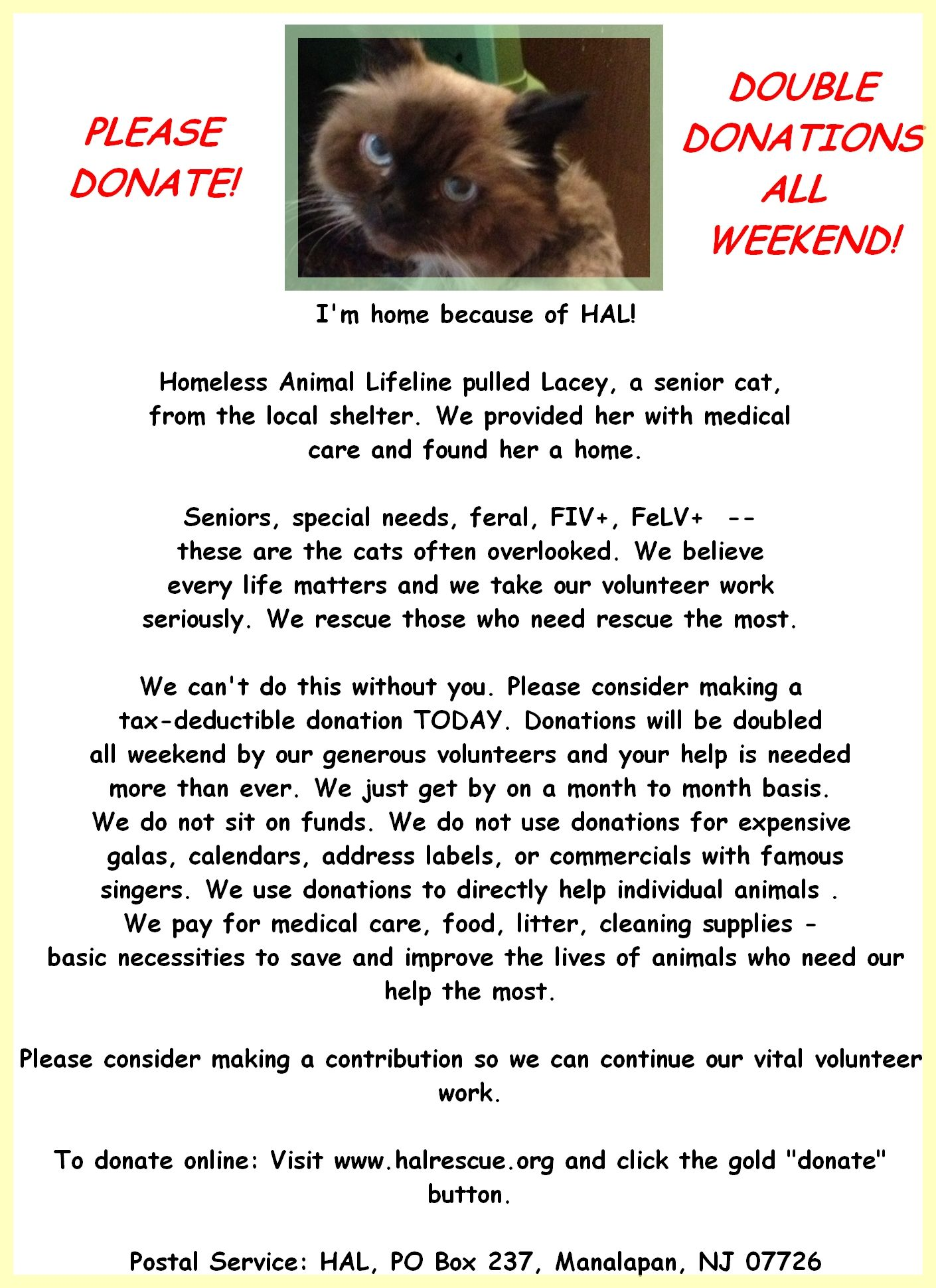 Lacey is out of the shelter and HOME!   Follow on FB: http://on.fb.me/1hvSSWM
