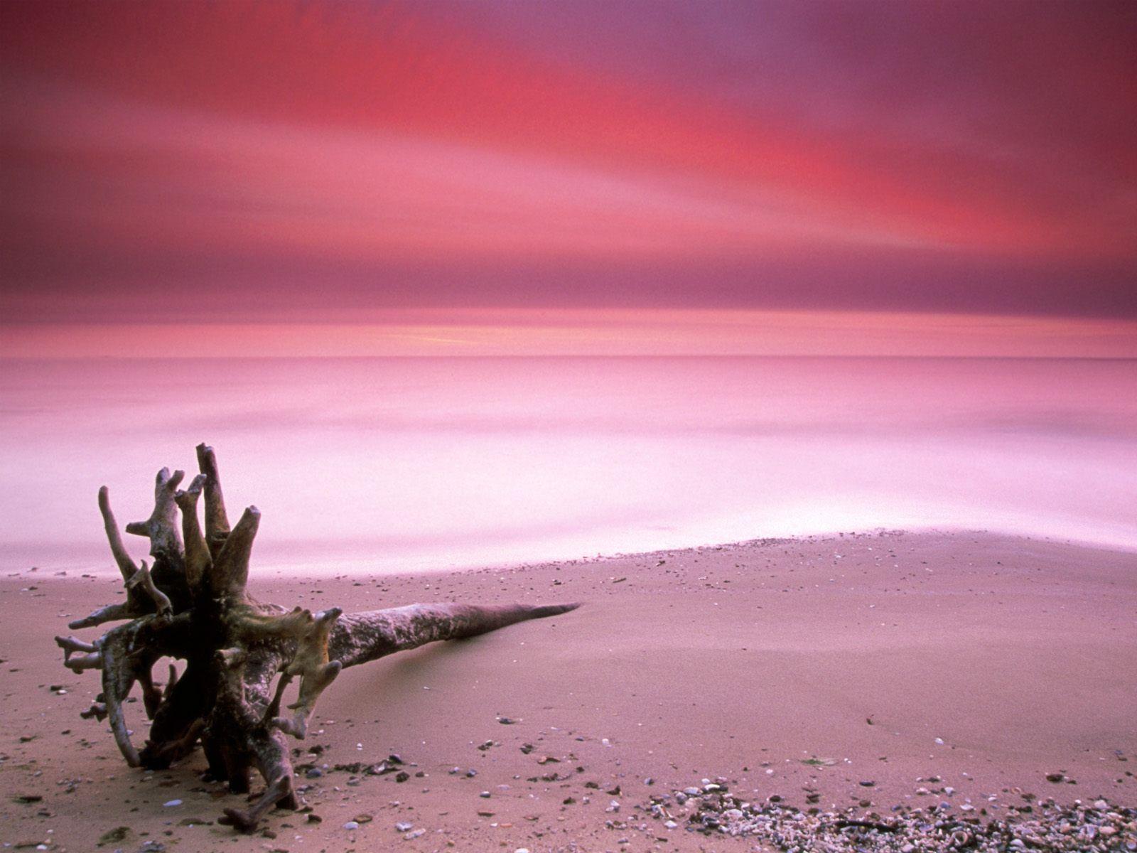 Pink Sand Beach Bahamas 1600x1200