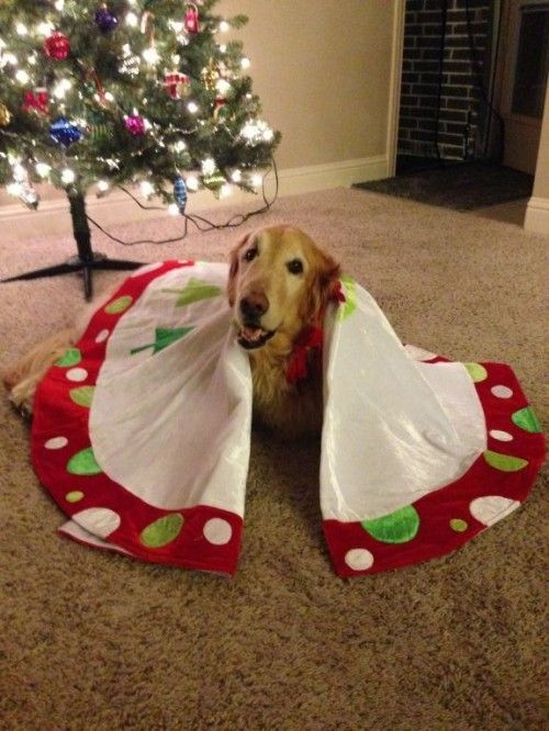 The howlidays are here folks! Here's our modified version of that classic tune: the Twelve Days of . . . Tripawd!