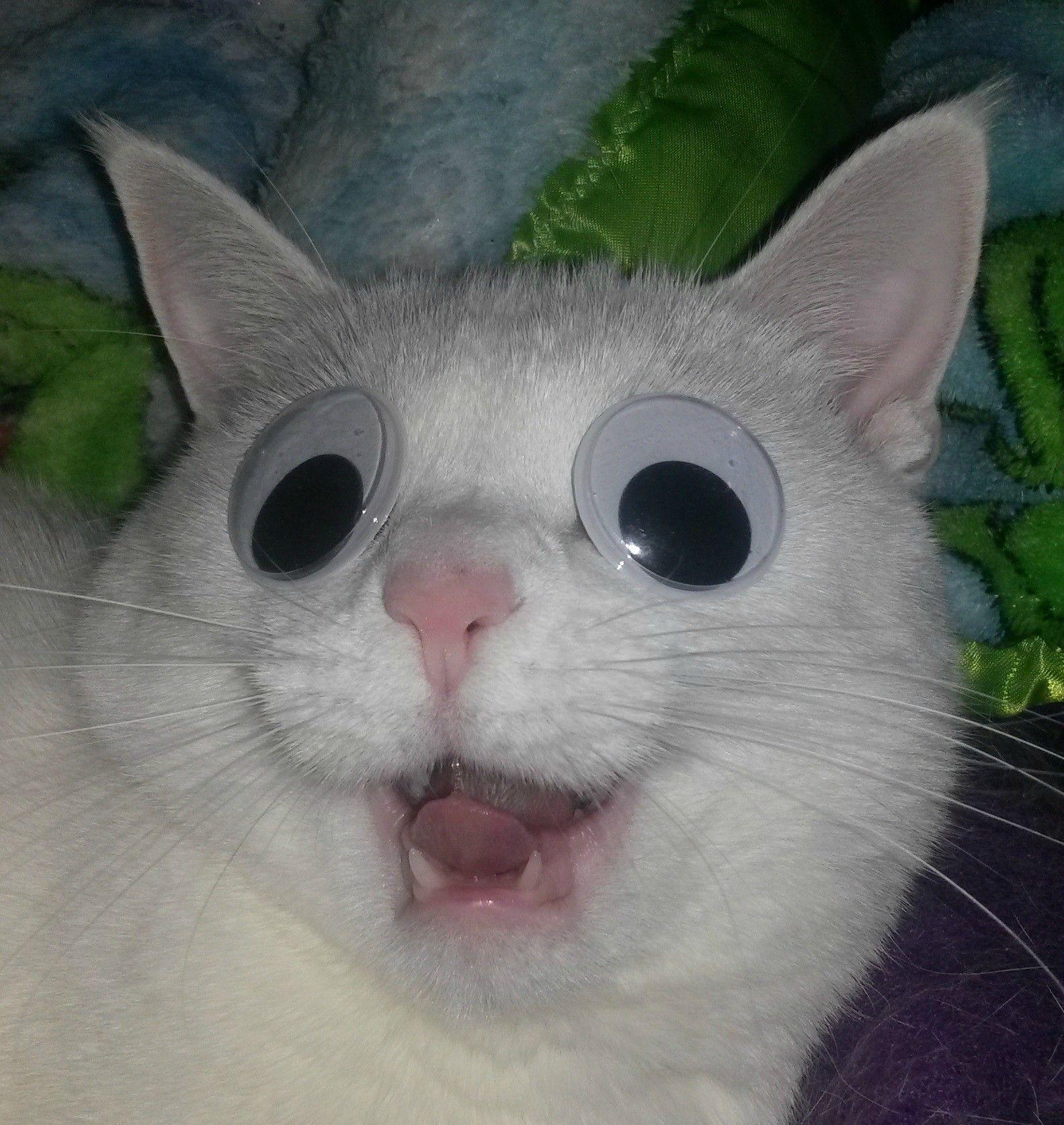 Cats on things! 아기 동물, 웃긴 동물 사진, 웃긴 동물