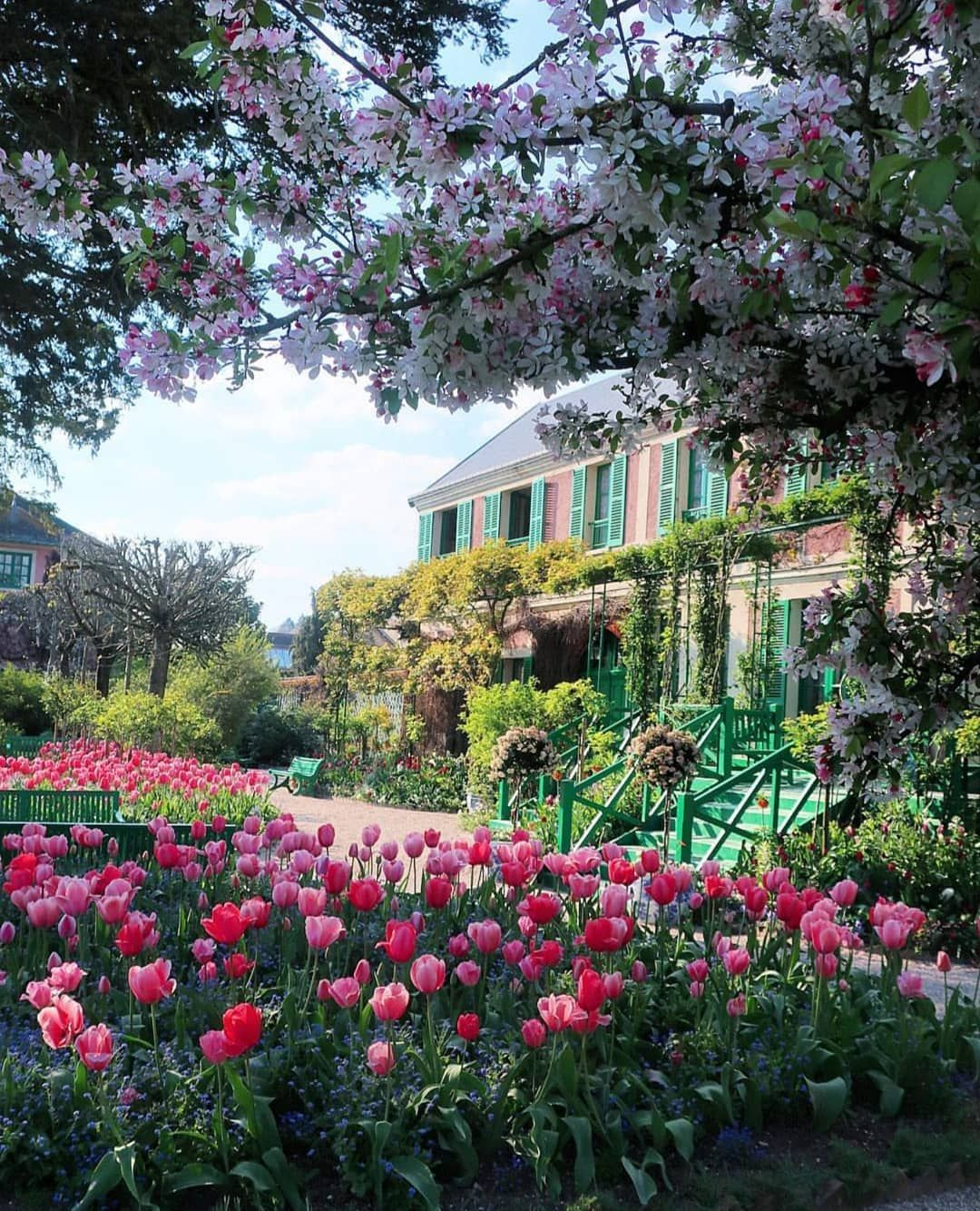 Image May Contain Plant Flower Tree Outdoor And Nature Monet Garden Giverny Gorgeous Gardens Beautiful Gardens