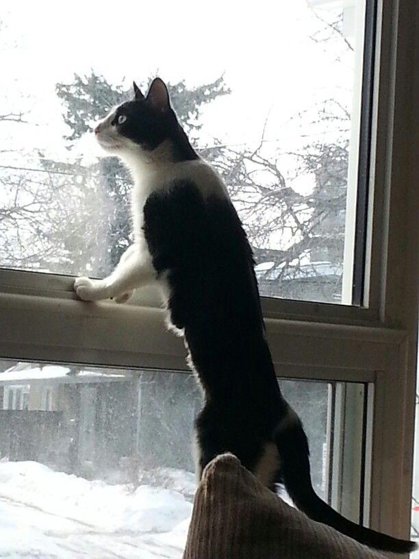 Mom,Mom,Mom; squirrel  !