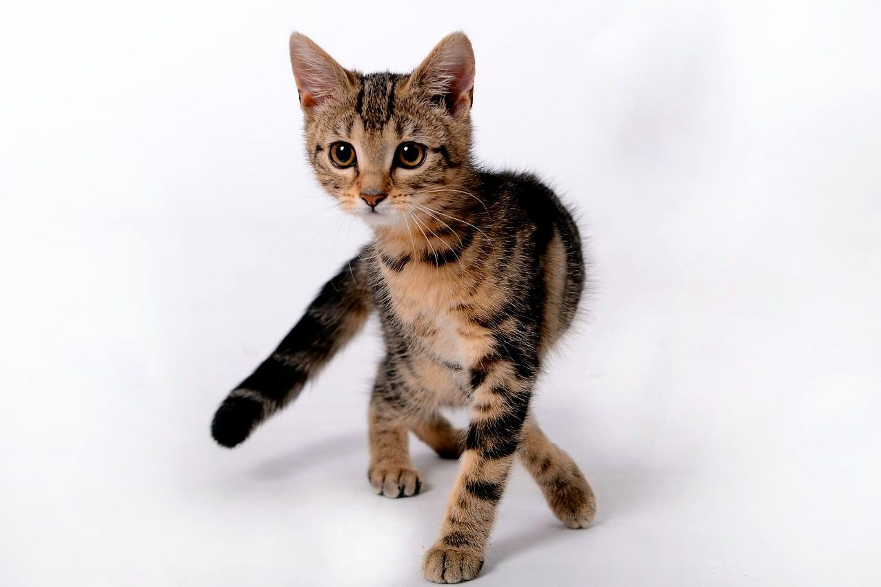 Oh yeah i love those dancing shows on tv - http://cutecatshq.com/cats/oh-yeah-i-love-those-dancing-shows-on-tv/