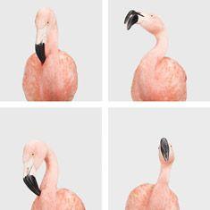 Four-Flamingos_TN