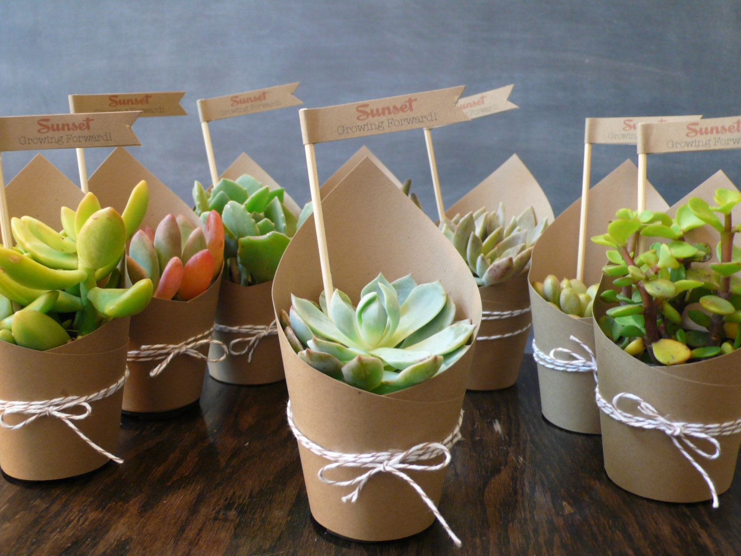 Succulent Party Favors Set of 5 by foundpurpose on Etsy, $25.00 ...