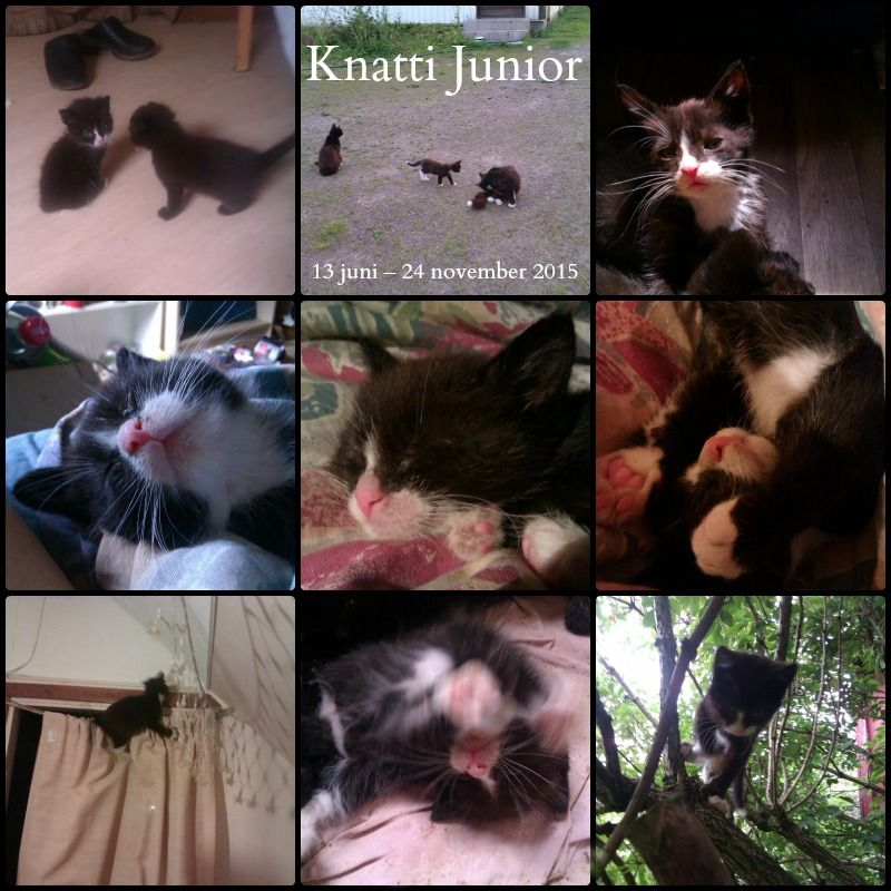 R.I.P. my sweet little kitten. The world will be a sadder place without you. I miss you so much! :'‑(