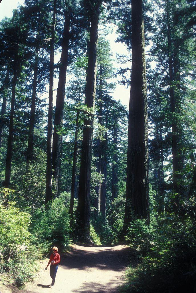 Redwood National Park | File:REDWOOD NATIONAL PARK, CALIFORNIA.jpg - Wikimedia Commons