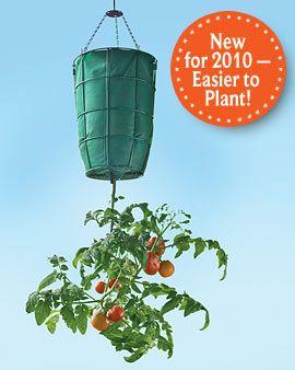 bolsa contenedora planta tomate