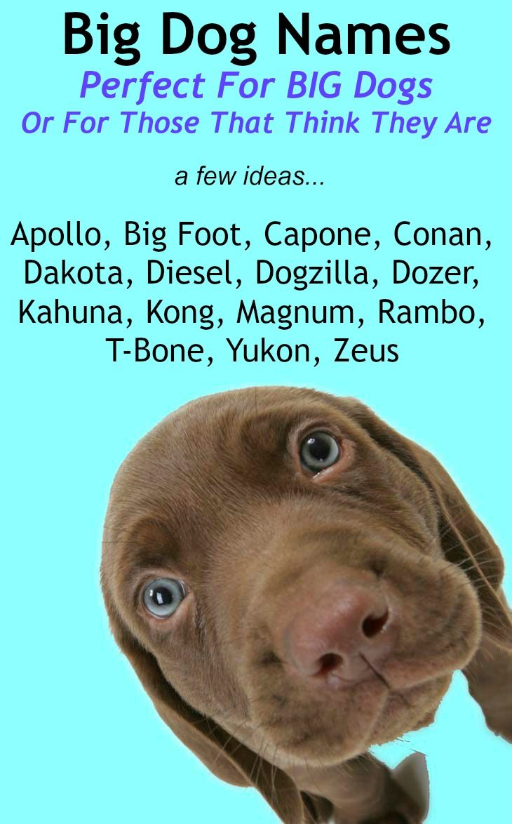 Dog Names - The Top Dog Names In 2019 - Hundreds of ...