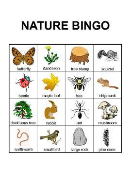 Nature Bingo {FREEBIE} (With images) | Summer activities ...