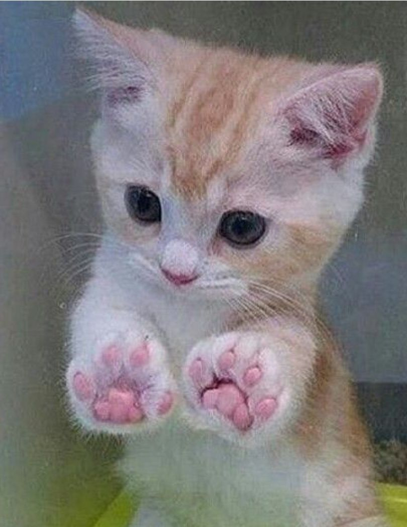 Pin By Thelma Haudon On Kittys Cute Animals Kittens Cutest Cats And Kittens