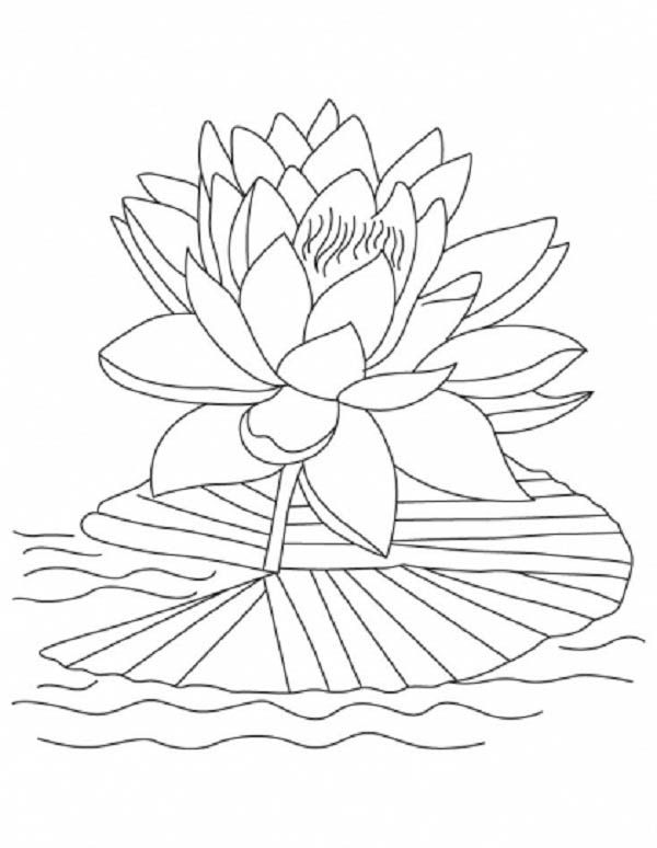 Lotus Flower, : Lotus Flower Reopen and Bloom Coloring Page