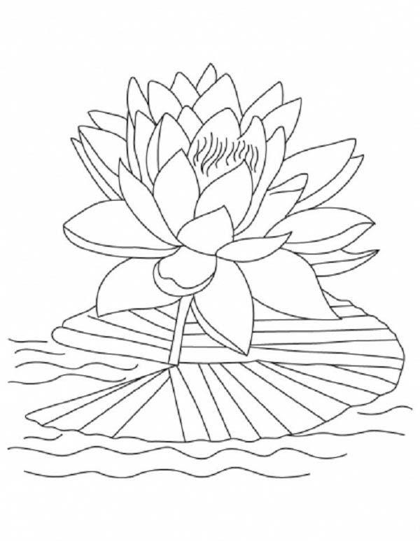 Lotus Flower Lotus Flower Reopen And Bloom Coloring Page Diy