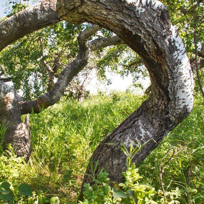 Untitled Tak, Photo, Tree