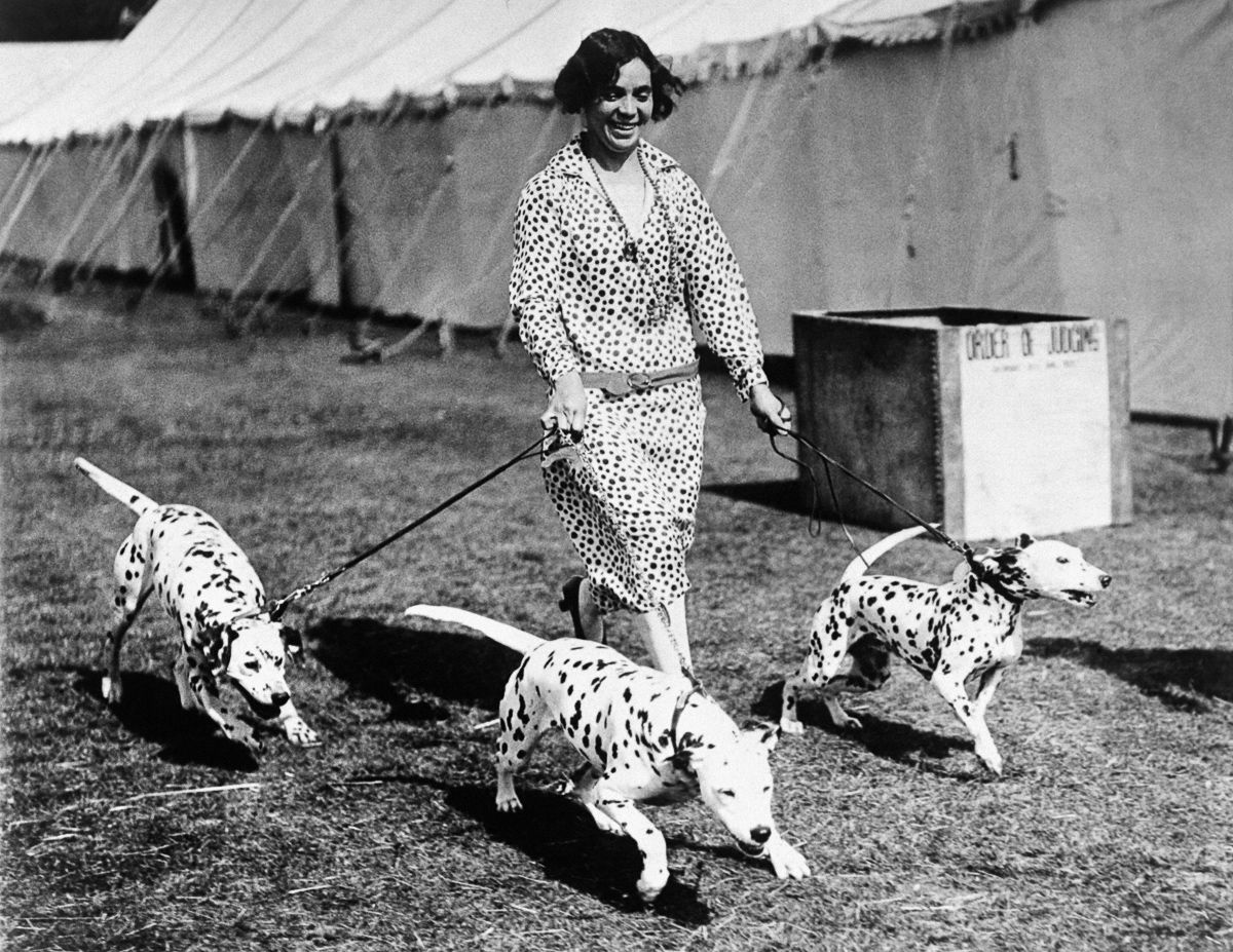 Vintage Dog Shows Were Just As Bizarre And Adorable As Today