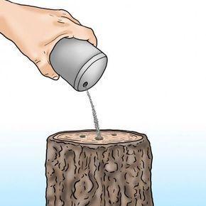 Baumstumpfe Entfernen Die Wichtigsten Methoden Im Uberblick Gaart