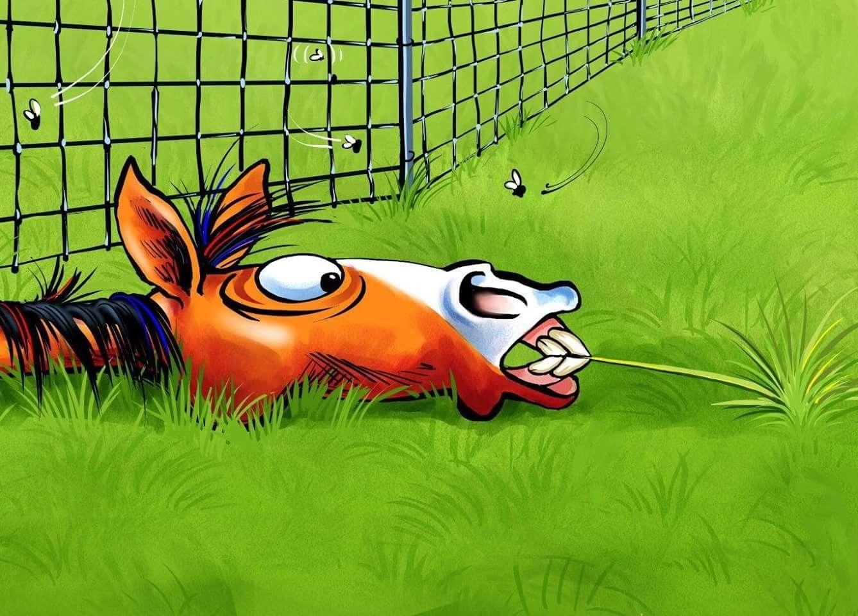 In Nachbars Garten Ist Das Gras Immer Gruner Horse Cartoon Animal Caricature Whimsical Art