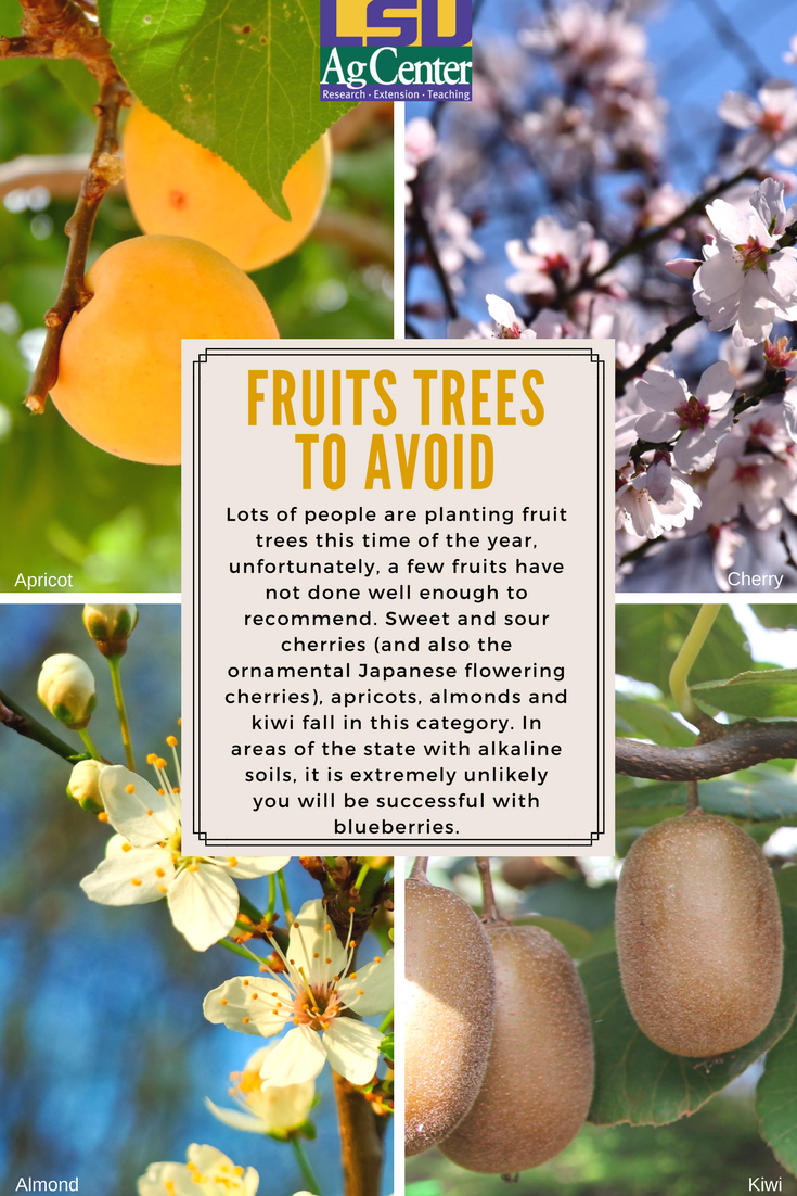 Unfortunately A Few Fruits Have Not Done Well Enough To Recommend Sweet And Sour Cherries And Also The Ornam Planting Fruit Trees Fruit Trees Trees To Plant
