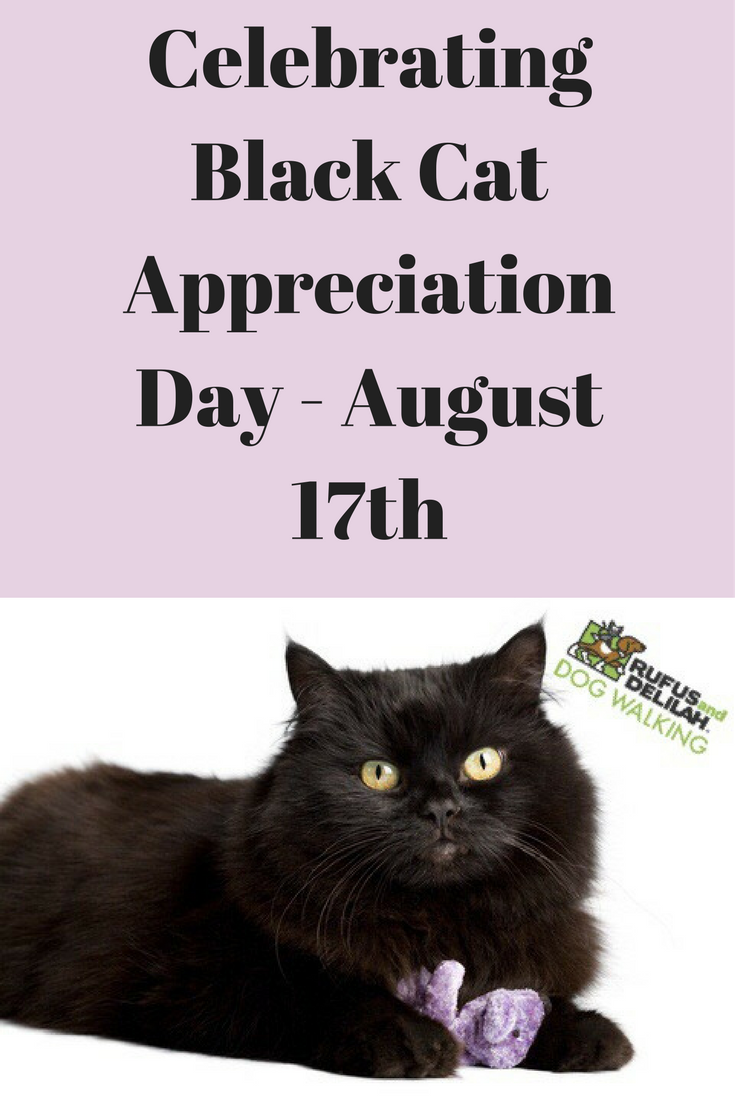 Celebrating Black Cat Appreciation Day August 17th