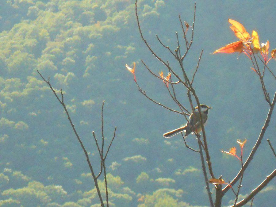 Autumn Bird by obsceneOSTRICH.deviantart.com on @deviantART
