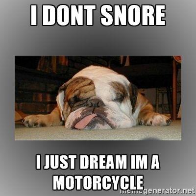 British Bulldog Memes Google Search French Bulldog Funny