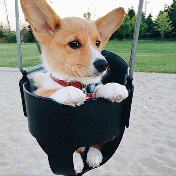 Just Swangin More With Images Cute Animals