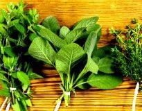 plantas que curam - Bolsa de Mulher