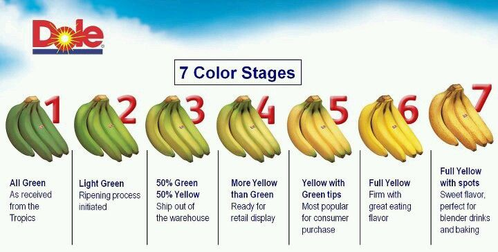 7 stages of bananas food fruit scenery banana meals food