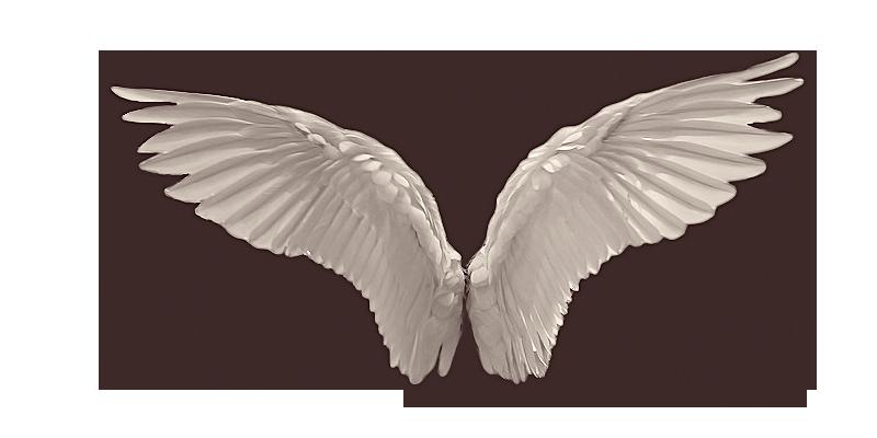 Wings Favourites By Elfablu On Deviantart Angel Wings Png Wings Png Angel Wings Edit