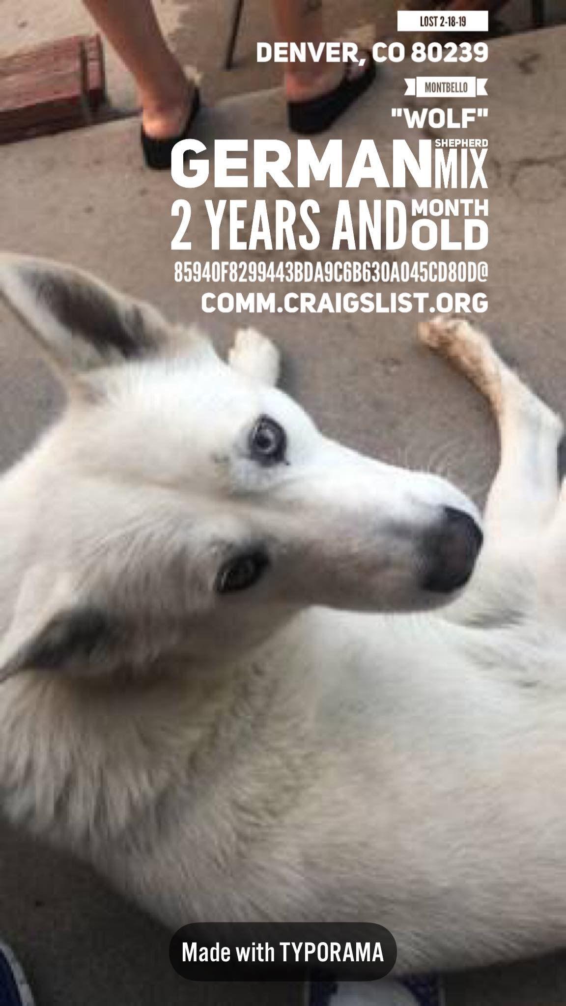 LOSTdog 2-18-19 #Denver, #CO 80239 Montbello