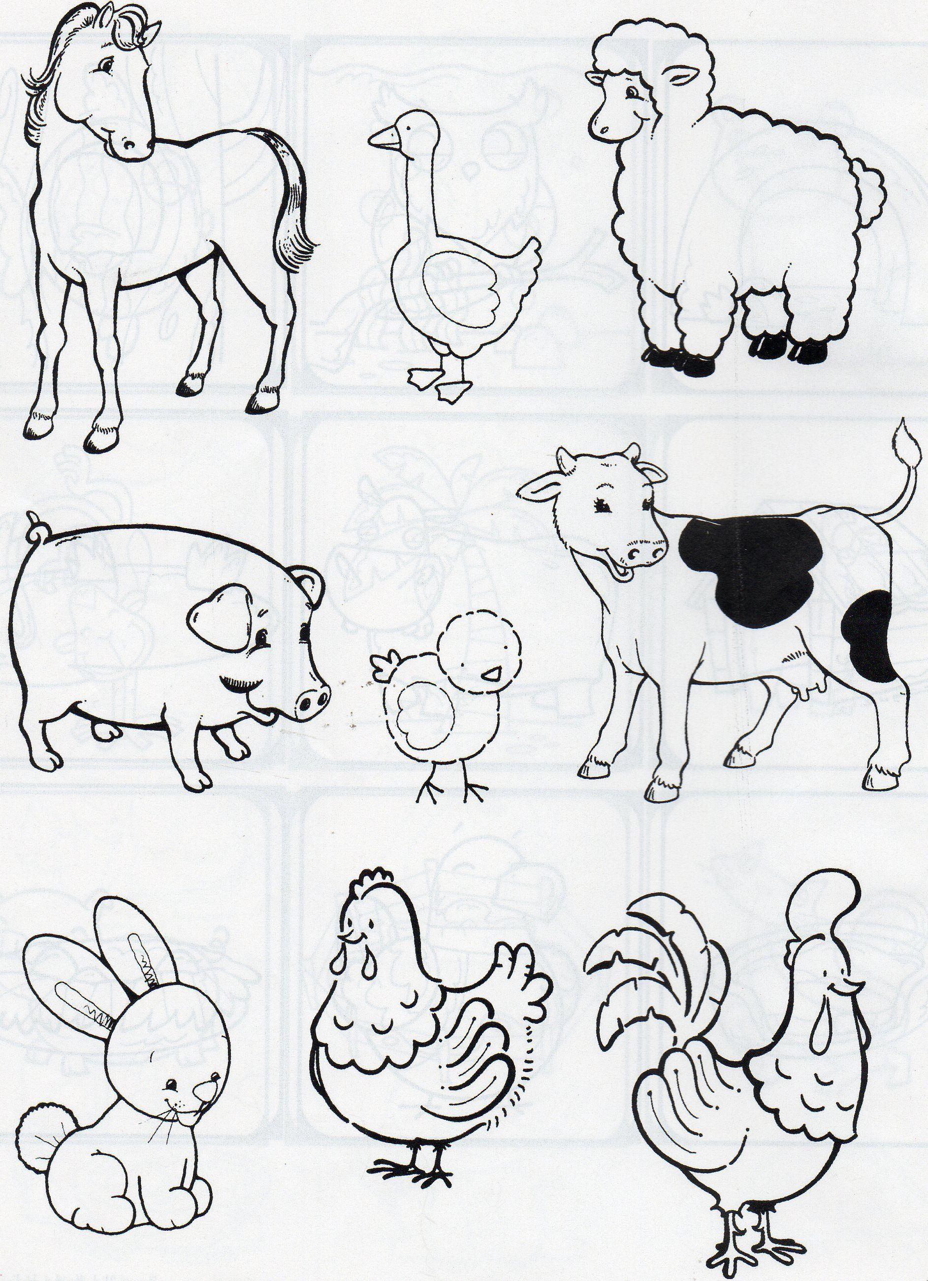 Animales De Campo Y De Corral