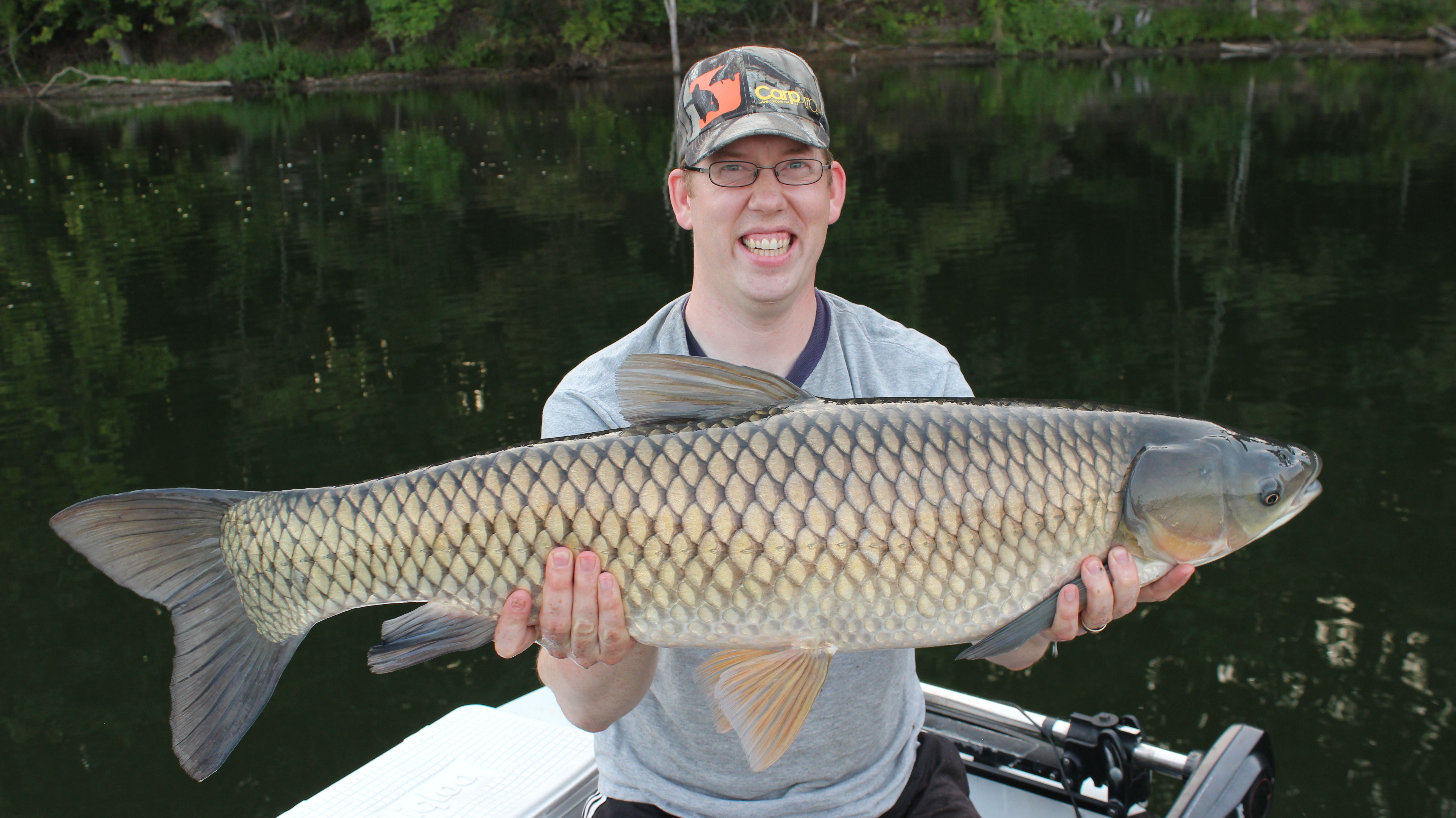 4513ec88c2 A nice 29.5 lb grass carp caught on the surface using floating fish  pellets. For