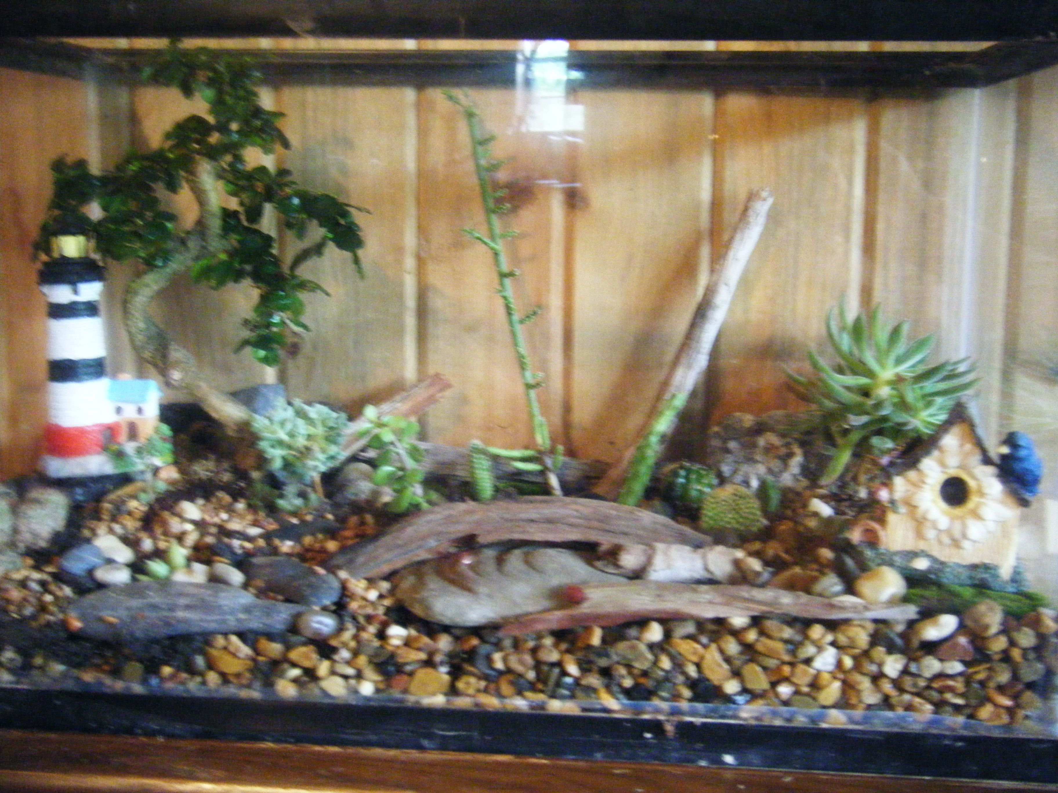 A fish tank converted into terrariumwith diff kinds of cactus