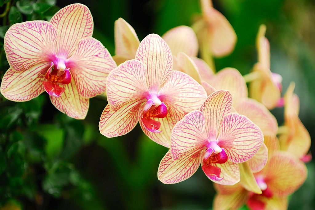 Simply Beautiful Orchids!