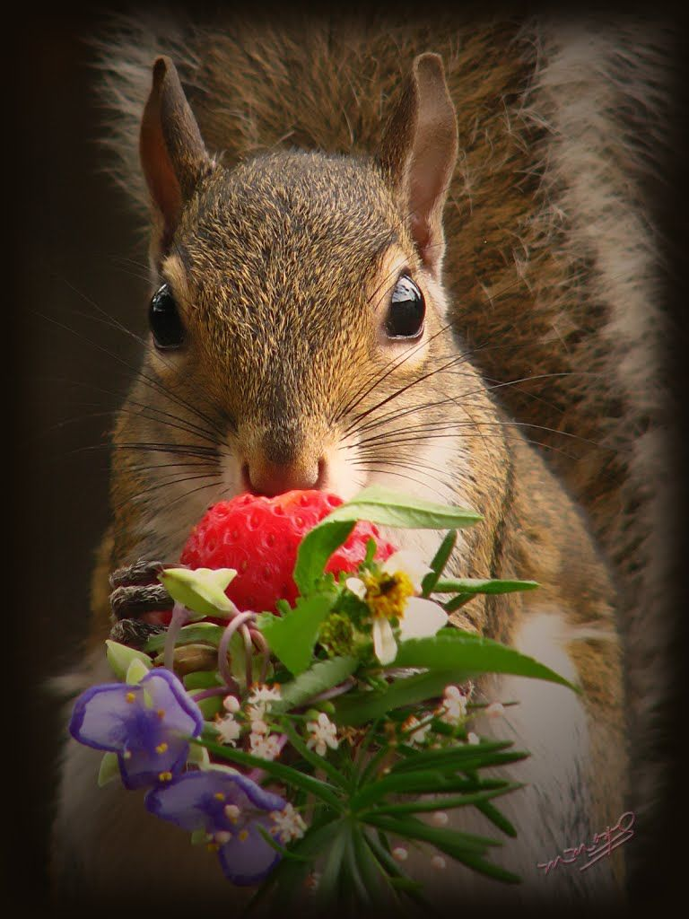 Squirrel with flower bouquet. Squirrel pictures