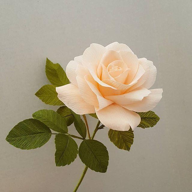 Crepe paper rose by Lynn Dolan #crepepaperroses